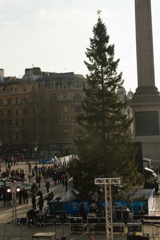 Christmas tree at Trafalgar's Square.