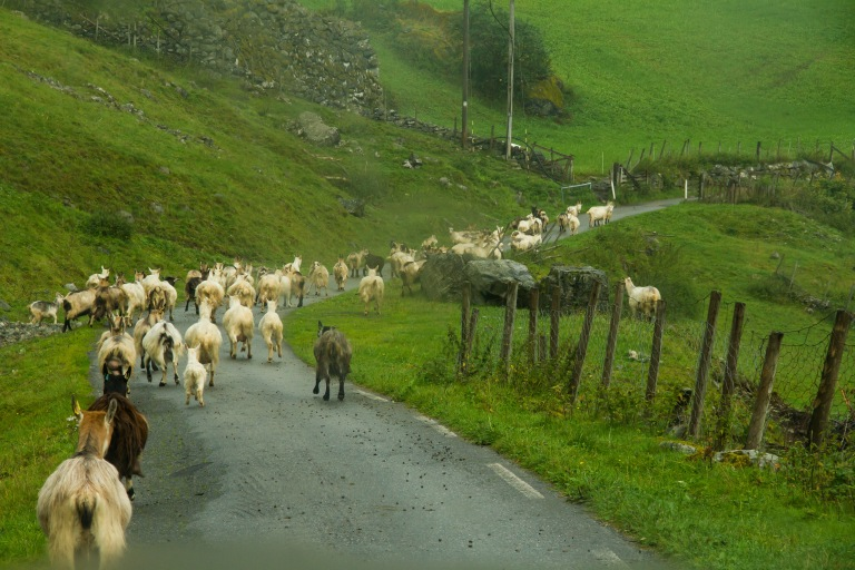 Then some goats were blocking the road.