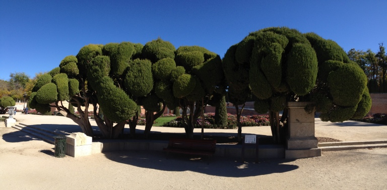 BC's panorama of the coolest trees ever.