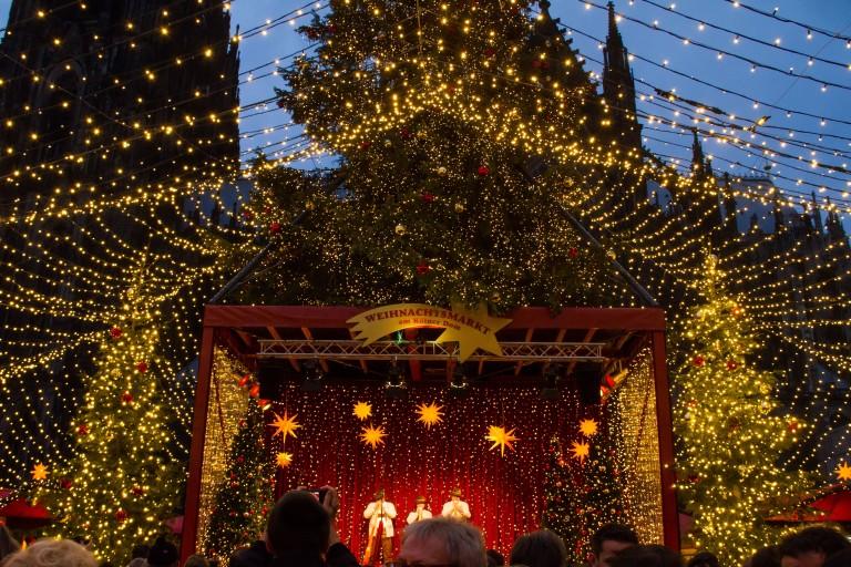 The scene under the tree!