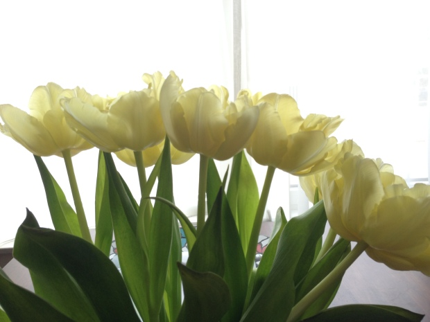 First tulip purchase of the year!