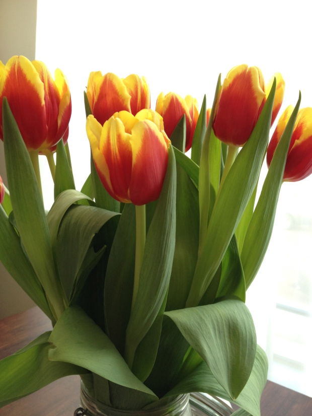 No Spring is complete without Cyclone tulips...
