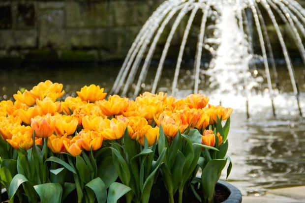 Hey, more tulips - crazy.