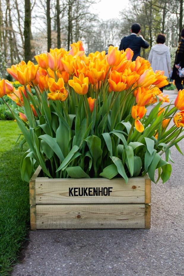 Some pretty tulips.