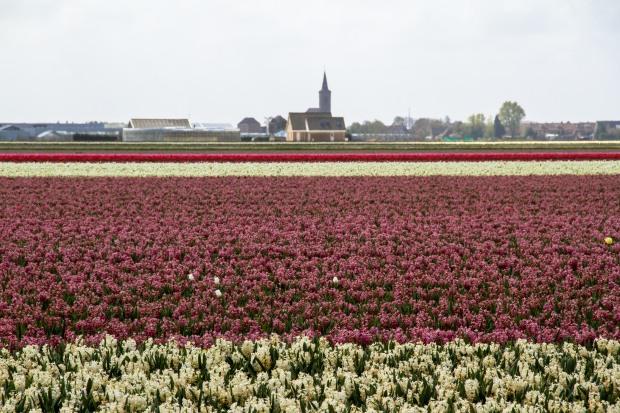 A non-tulip field - still beautiful!